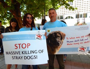 Activists from Four Paws, an international animal welfare group