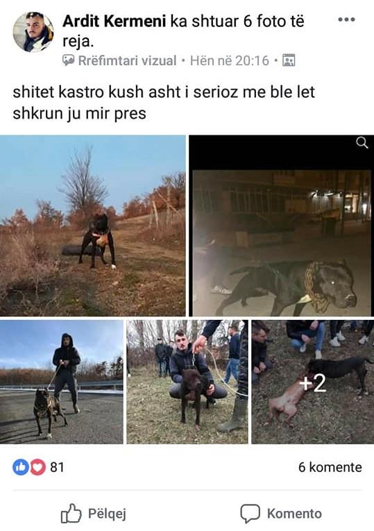 Dog fighting rings targeted across Kosovo - Prishtina Insight